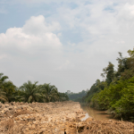 Indonesia Steps Back From Undermining Legal Timber Exports Undercover Of The Coronavirus